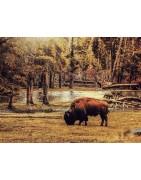 Saucisson de bison, terrine de bison